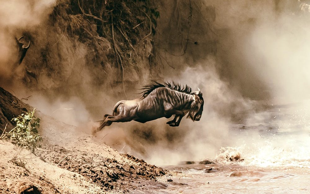 The Great Migration Safari