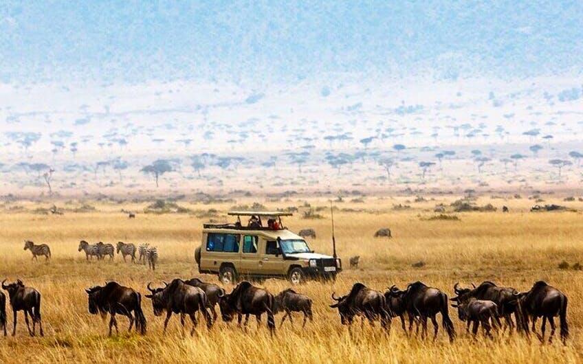 4 Days Camping Safari To Tarangire ,Serengeti and Ngorongoro.
