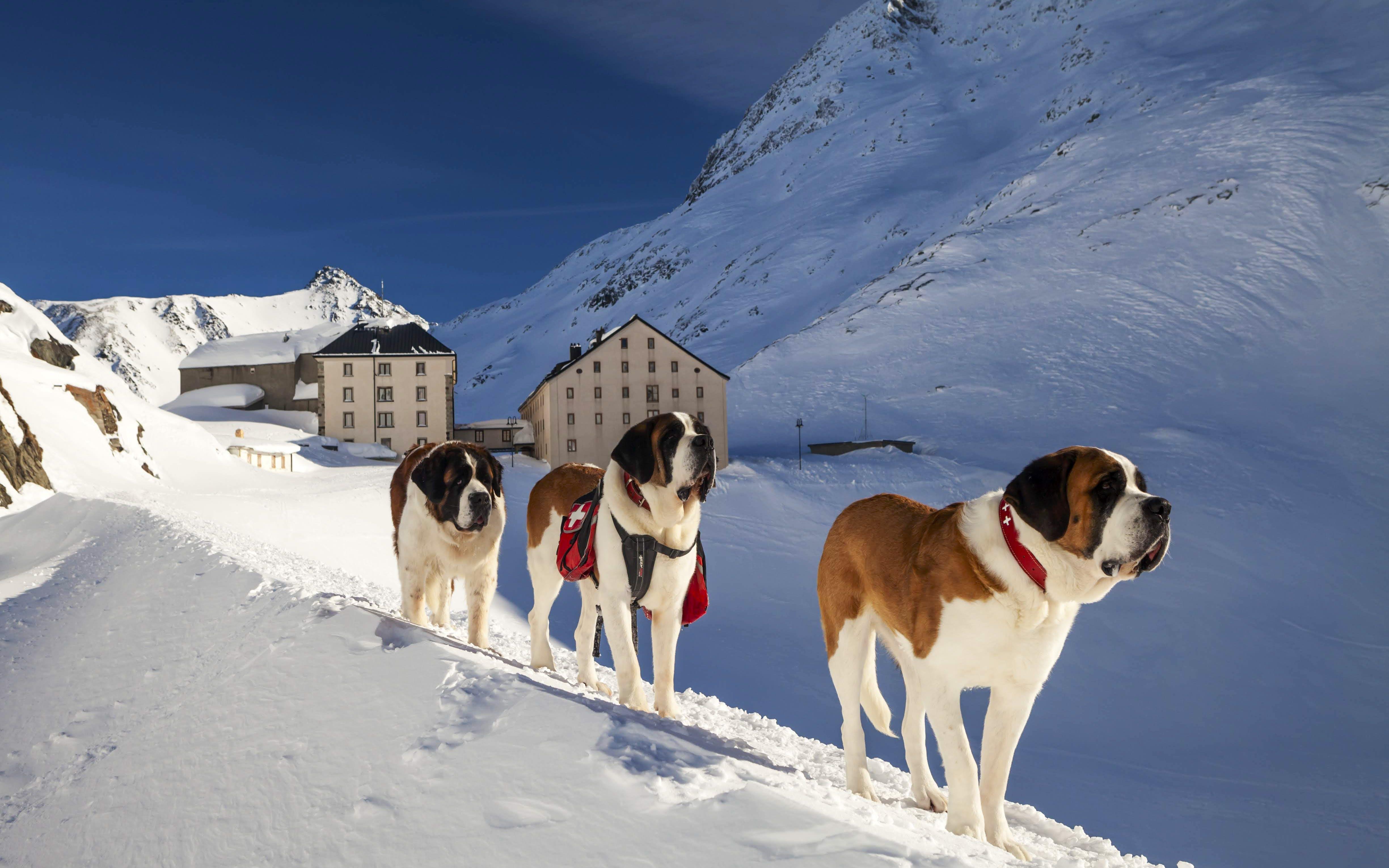 St Bernard's Snowshoe Pilgrimage